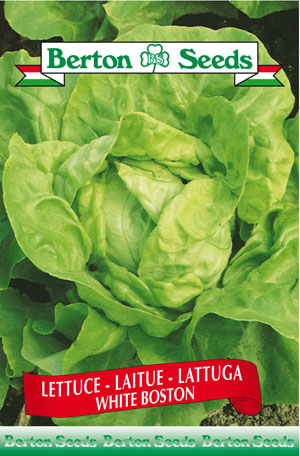 White Boston Lettuce Seeds