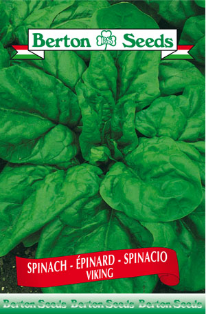 Viking Spinach Seeds