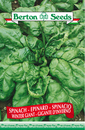 Winter Giant Spinach Seeds